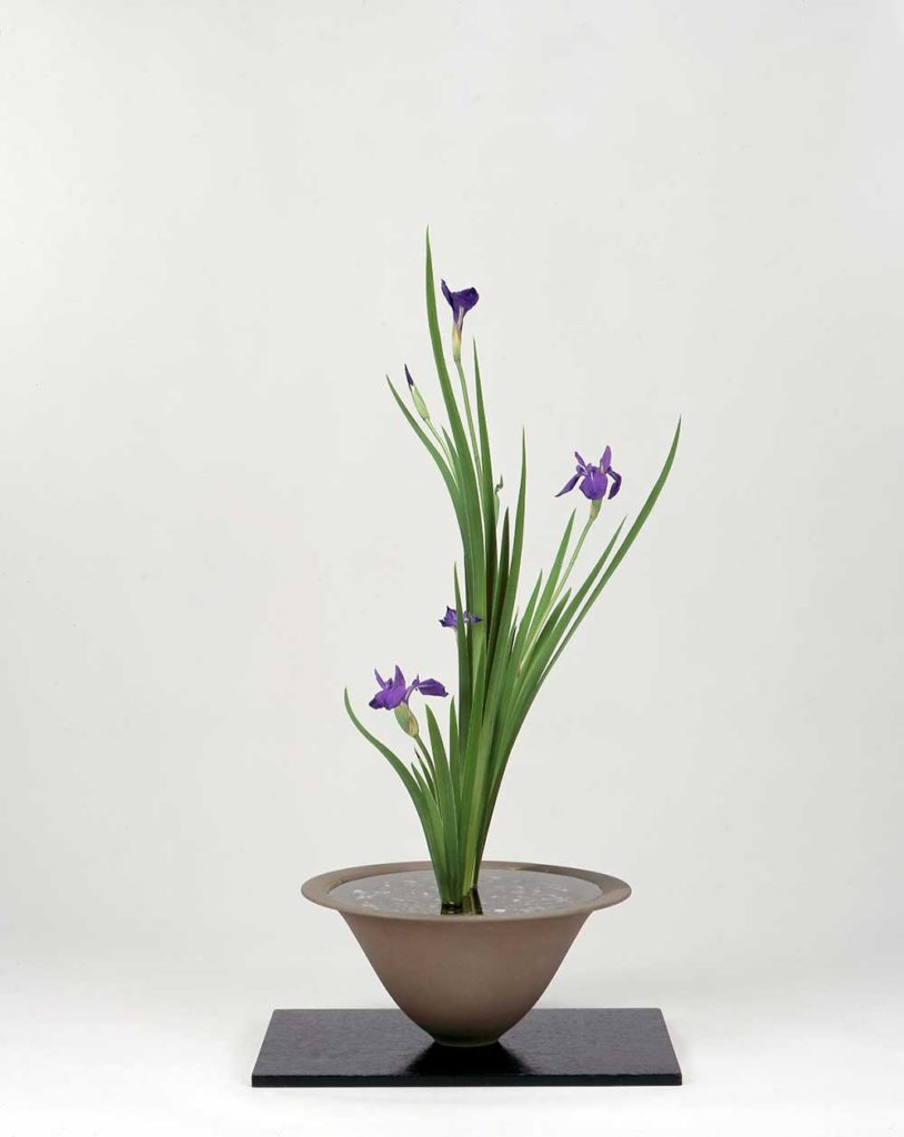 Iris shoka arrangement